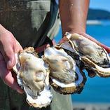 生産者から直送の新鮮な牡蠣・ほやが毎日食べられる!