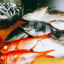 獲れたて鮮魚など魚が旨い大衆酒場