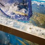 生簀からすくい上げる活魚は新鮮そのもの!旬の味わいを是非!