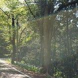足羽山の新緑の季節はお散歩がきもちいいです。