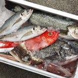 新鮮な旬の鮮魚を、お寿司で堪能♪