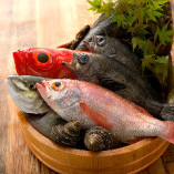 全国の漁港から選んだ新鮮鮮魚【全国各地】