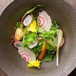 彩り豊かな野菜のサラダをどうぞ