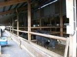 近江牛発祥地<中川畜産>直仕入 滋賀県名物の近江牛料理を是非