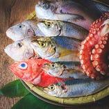 淡路の獲れたて鮮魚【兵庫県淡路島】