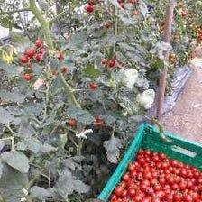 農家さんが大切に育てた新鮮野菜