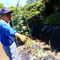 全国の契約農家のひとつ、太田さんの野菜