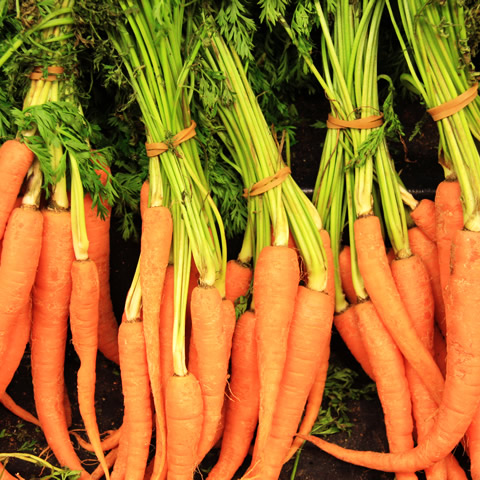 *-*-* Carrot of nutrition -*-*-*-*